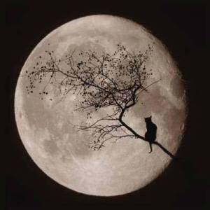 Gato mirando a la luna llena en su máximo explendor.