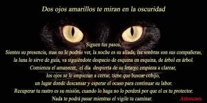 poema gato