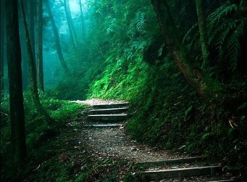 Camino del bosque oscuro