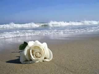 Rosa del Mar
