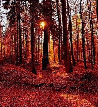 Bosque Extremeño.