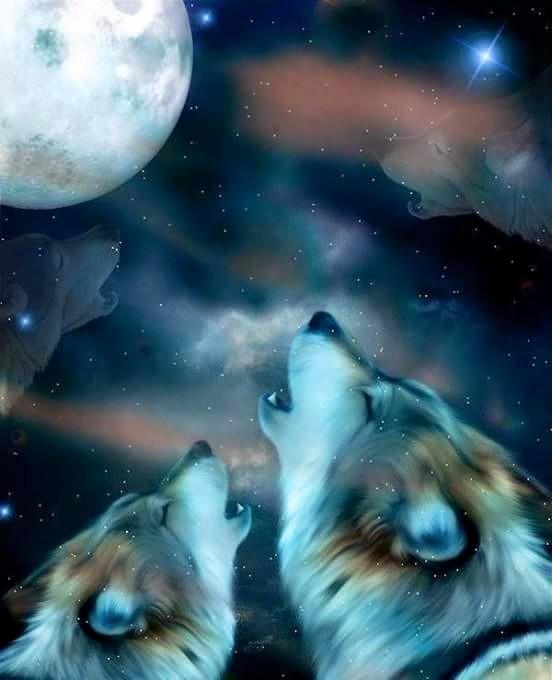 Aulló cuan Lobo a la Luna