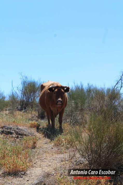 Vaca-ciones.jpg