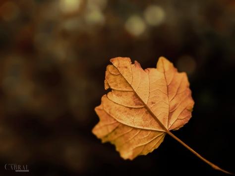 1_Natura dorata