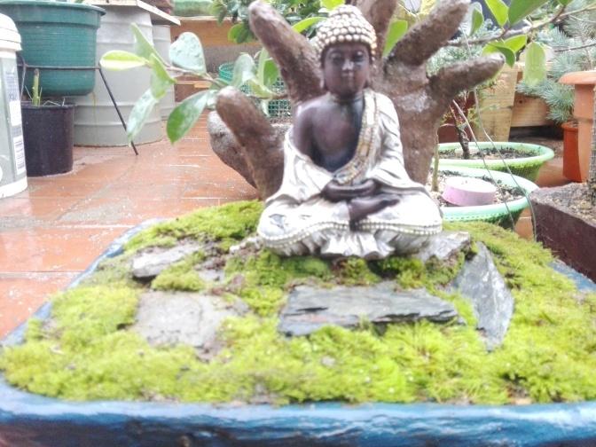 Actualización del ficus Buda