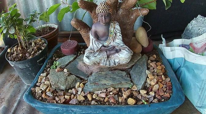 Desfoliado del ficus Buda
