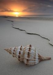 Se quedaba absorto, como un niño, al mirar la mar convertida en hélice  frágil (inspiración) « Gabinete Villanueva de Investigaciones Históricas